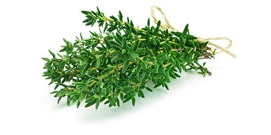 Thymian als Heilpflanze bei Husten