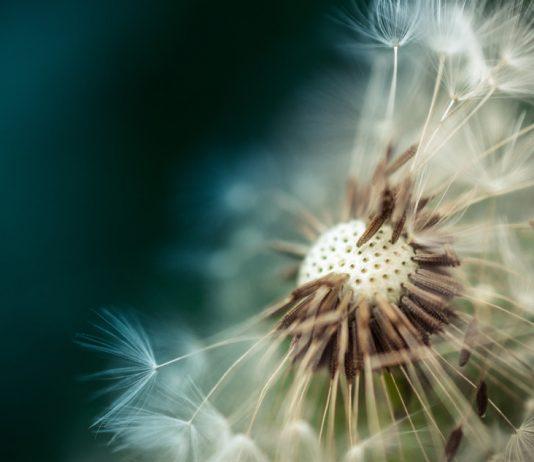 allergie-pollen-heuschnupfen-cetirizin-loratadin-bodfeld-online-apotheke