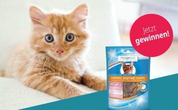 Weltkatzentag Gewinnspiel Bodfeld Apotheke